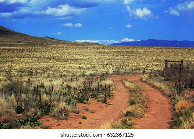 Desert road in springtime. Petroglyph National Monument, Albuquerque, New Mexico.