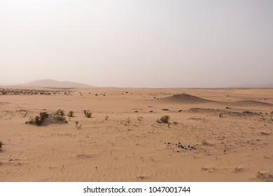 Desert sand dunes and rocks in the desert under a blue sky