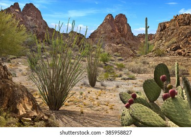 Desert Scene with cactus and rugged mountains in Arizona