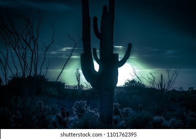 Desert silhouette; Moonlight Saguaro Cactus tree landscape