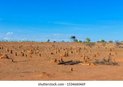 desert strewn with termite mounds