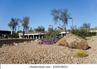 Desert style landscaping with native drought tolerant plants and cacti around business park in capital Arizona city of Phoenix