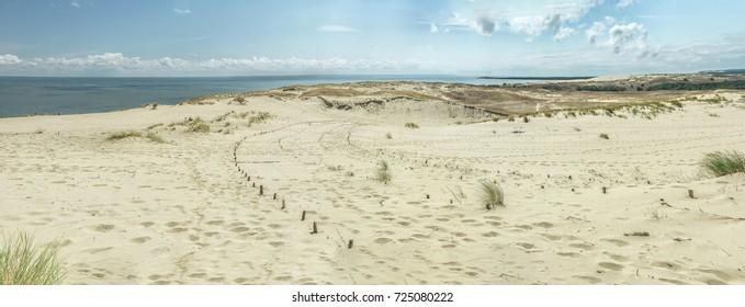 Desert  in summer