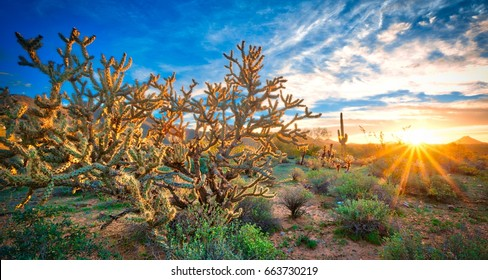 Desert Sunrays - The sun peeks over the horizon in a Sonoran desert landscape.  The sun's rays are juxtaposed against a massive cactus that is capturing the light.