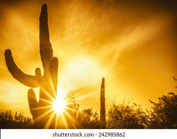 Desert sunset background, Phoenix, Az