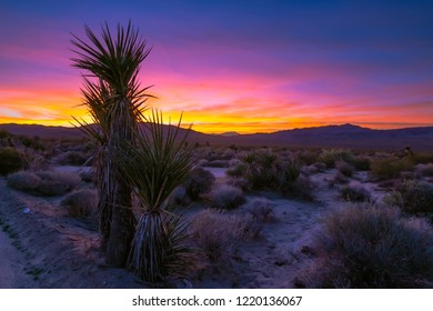 Desert Sunset Dreams