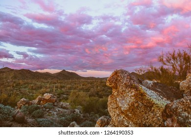 Desert sunset with pink sky