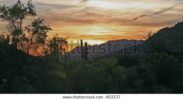Desert Sunset With Saguaro