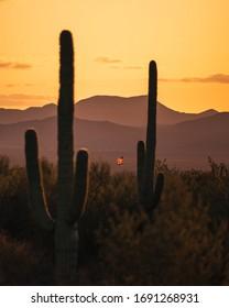 Desert sunset with saguaro cactus