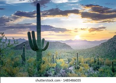 Desert Sunset: Saguaros and small cacti in Sonoran Desert - Saguaro National Park, Arizona, USA