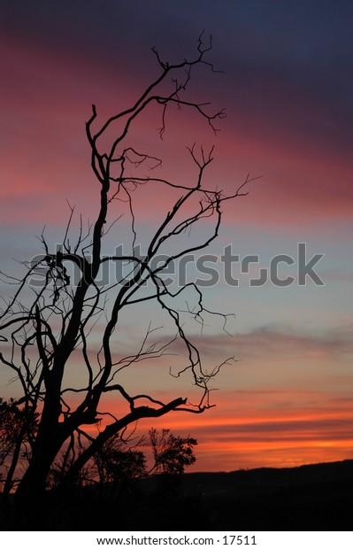 Desert Sunset tall