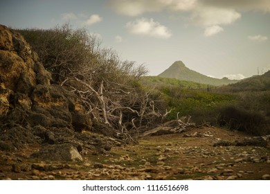 Desert terrain with cacti and small shrubs at sunset with a mountain in the background
