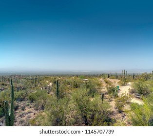 Desert valley landscape with Saguaro cactus and bushes under hazy blue sky.