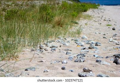 Desert wild beach with sand, grass and rocks