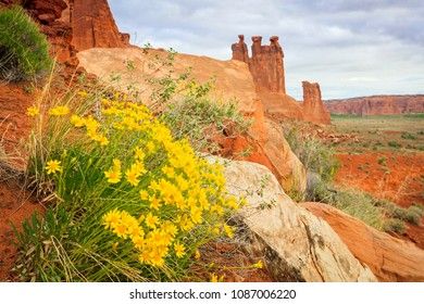 Desert wildflowers in arches, Moab, Utah, USA.