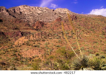 Desert Yucca Mountains Texas Tom Mays Stock Photo Edit Now 482217