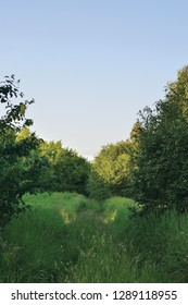 Deserted Abandoned Verdant Rural Woods Country Road Trail Perspective Overgrown Wild Grass Trees, Village Tree Forest Countryside Off-road Path Landscape Vertical Bright Blue Summer Evening Sunset Sky