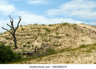 Deserted area landscape with old tree and sand grass and blue sky