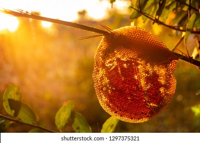 The deserted honeycomb is set in the warm morning sunlight.