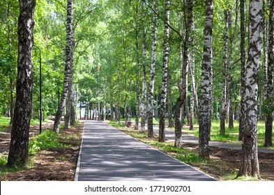 A deserted jogging tracks and walkway during the morning time in public park in Nizhny Novgorod with lots of shade from big birches trees above