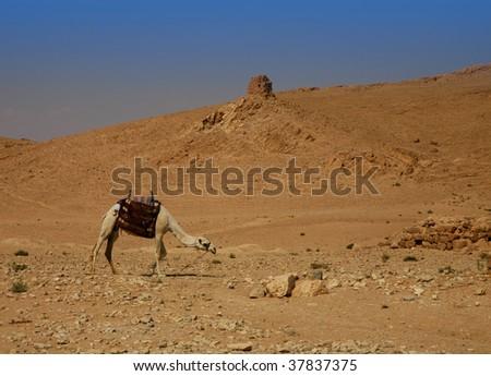 deserted landscape camel syrian desert stock photo edit now