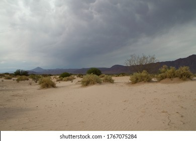Deserted landscape. View of the arid desert, sand, flora and mountains.