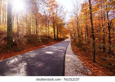 Deserted road crossing a forest during autumn. Colorful trees at sides.