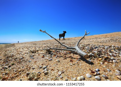 Deserted seashore on the sand, where the shells lie and the dried tree branch and the dog in the distance and the blue sky