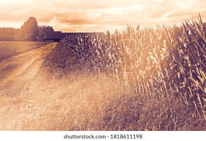 Weizen- und Maisfelder in Bayern bei Morgengrauen im modernen Stil