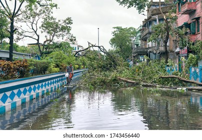 Deshapriya Park, Kolkata, 5/22/2020: A man with bicycle walking through flooded city street, caused by heavy rainfall during cyclonic storm Amphan. A large uprooted tree lying there made a roadblock.