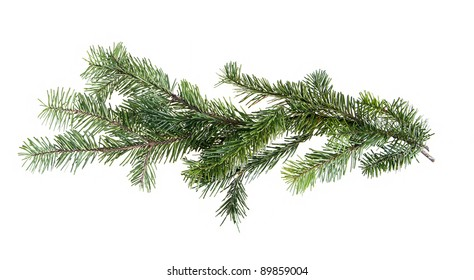 Design element.  Border of spruce branches
