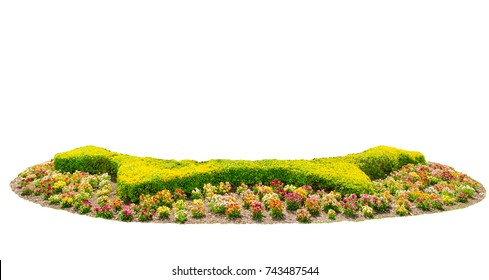 Design hedges cut green tree with colorful flowers bed isolated on white background.