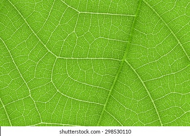 It is Design on leaf texture for pattern and background.