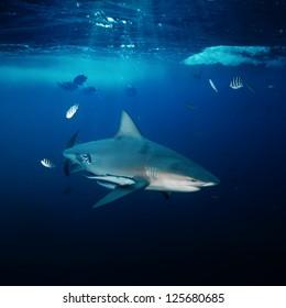 design underwater postcard big angry dangerous shark hunting in blue deep ocean