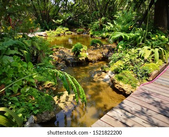 Design waterfall with koi fish pond in the garden