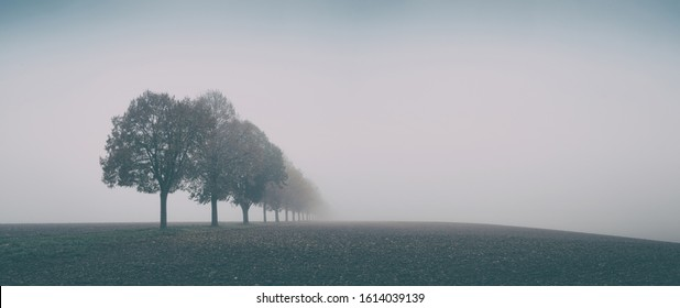 Desolate Autumn Landscape, Row of Trees in Thick Fog