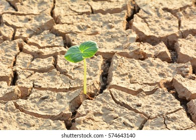desolate land or dry areas have little green plant growth up, new hopes and encouragement