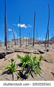 A desolate landscape of ash and tuff surrounds Mt. Tavurvur, one of the volcanic peaks abutting Rabaul, in Papua New Guinea. Its ongoing eruption has buried the town, and forced most of the people out