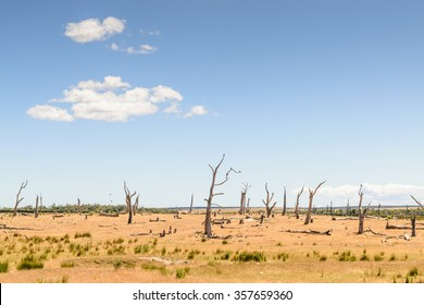 Desolate landscape with crows perched in dead trees. East coast, Tasmania, Australia