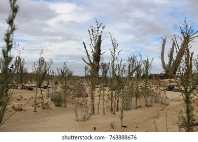 desolate landscape of a dried up dam with dead trees and shrubbery