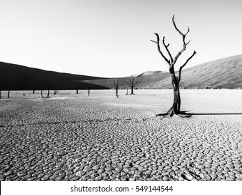 Desolated dry landscpe with dead camel thorn trees in Deadvlei pan with cracked soil in the middle of Namib Desert red dunes, near Sossusvlei, Namib-Naukluft National Park, Namibia, Africa. Black and
