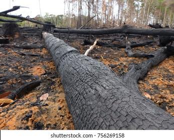 Destroyed Amazon rainforest by slash-and-burn, Brazil. Photo taken February 2, 2016