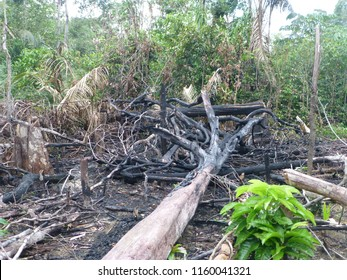 Destroyed tropical amazon rainforest. Image taken on 25th of February 2014
