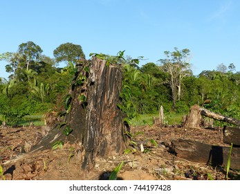 Destroyed tropical rainforest in Amazonia.