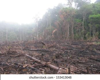 Destroyed tropical rainforest in Amazonia.  Image taken on 20 January 2010