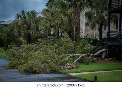 Destruction from Hurricane Michael