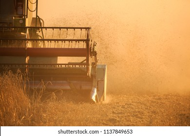 Detail of Agro farmer rye wheat harvest with harvester