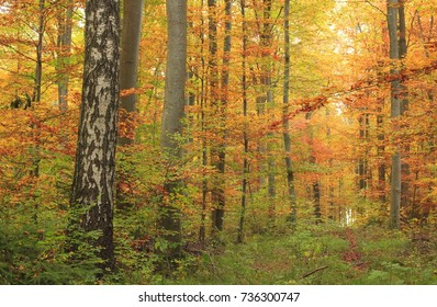 Detail of autumn colored forest in october