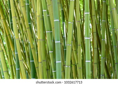 detail of the bamboo forest