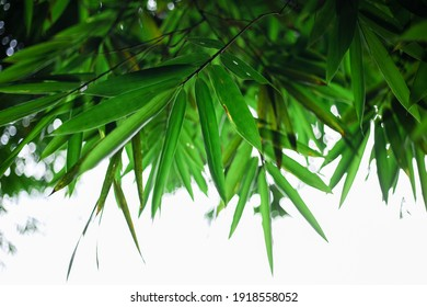 Detail of bamboo leaves, with blurry shooting technique. The white background adds to the aesthetic appearance